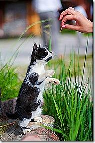 Дрессировка-кошек