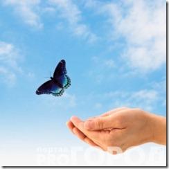 freedom-butterfly1