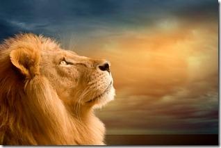 лев и небо