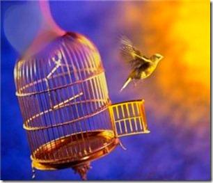 птичка из клетки